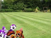 Lawn-treatments-in-Swallowfield.jpg