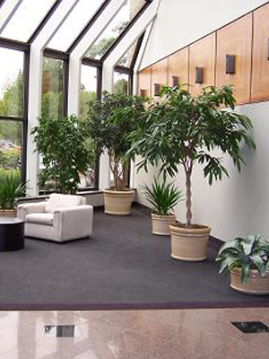 Interior plants in Hungerford.jpg