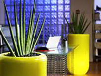 Interior plants displays in Berkshire.jpg